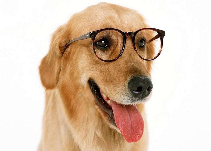 Oculistica veterinario balduina